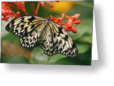 Paper Kite Butterfly Greeting Card