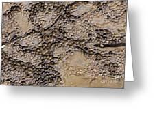 Patterns In Dolostone Coastal Rocks Greeting Card