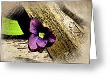 Peeking Violet Greeting Card