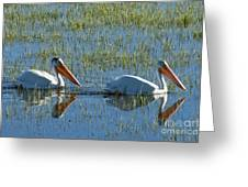 Pelicans In Hayden Valley Greeting Card