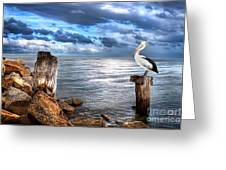Pelican's Pride Greeting Card by Shannon Rogers