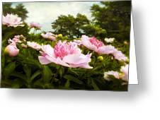 Peony Garden Greeting Card