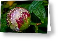 Peony With Rain Drops Greeting Card