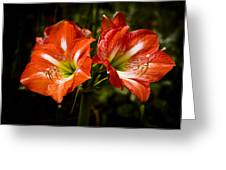 Petal Pair Greeting Card