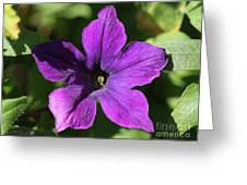 Petunia Hybrid From The Sparklers Mix Greeting Card