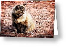 Pine Needle Kitty Greeting Card