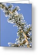 Pine Tree Branch Greeting Card