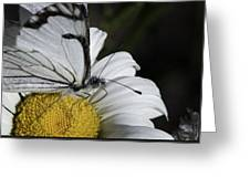 Pine White Butterfly Greeting Card
