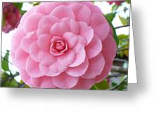 Pink Camellia Square Greeting Card