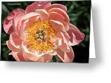 Pink Peony Greeting Card