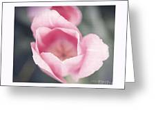 Pink Tulip  Greeting Card by Artist and Photographer Laura Wrede