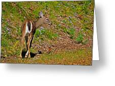 2 Points Greeting Card