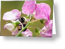 Pollination Nation II Greeting Card