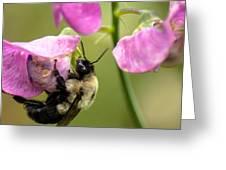 Pollination Nation V Greeting Card