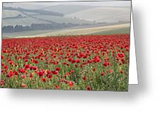 Poppy Field Landscape In Summer Countryside Sunrise Greeting Card