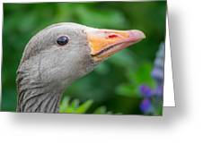 Portrait Of Greylag Goose, Iceland Greeting Card