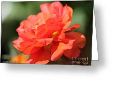 Portulaca Named Sundial Tangerine Greeting Card