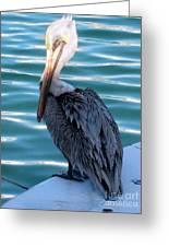 Precious Pelican Greeting Card by Claudette Bujold-Poirier
