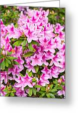 Pretty In Pink - Spring Flowers In Bloom. Greeting Card