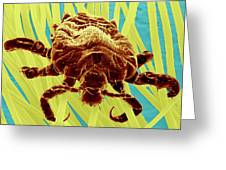 Pubic Louse Greeting Card