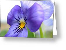 Purple And Blue Viola Greeting Card