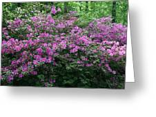 Purple Azaleas Greeting Card