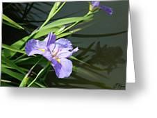Purple Iris Reflection Greeting Card