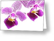 Purple Orchid-5 Greeting Card