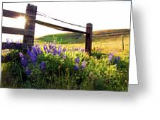 Purple Wildflowers Greeting Card