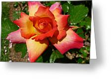 Rainbow Sorbet Rose Greeting Card by Denise Mazzocco