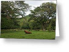 Rainforest At Ys River Greeting Card