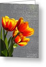 Red And Yellow Tulip's In A Window Greeting Card by Robert D  Brozek