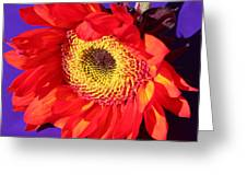 Red Sunflower Greeting Card