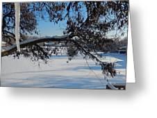 Redbud Tree In Winter Greeting Card