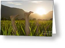 Relaxing Moment Greeting Card