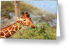 Reticulated Giraffe Kenya Greeting Card