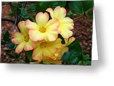 Rhododendron 'toff' Greeting Card