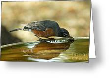Robin Drinking Greeting Card