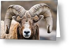 Rocky Mountain Big Horned Sheep Greeting Card