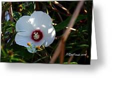 Rose Of Sharon Greeting Card