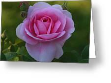 Rose Of Spring Greeting Card