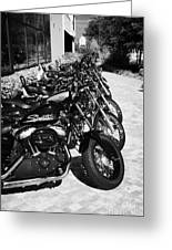 Row Of Harley Davidson Motorbikes Including Sportster Outside Motorcycle Dealership Orlando Florida  Greeting Card