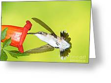 Ruby Throated Hummingbird Female Greeting Card
