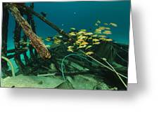 Safari Boat Wreckage And Aquatic Life In The Red Sea. Greeting Card