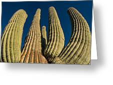 Saguaro Cactus Greeting Card