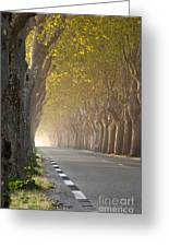 Saint Remy Trees Greeting Card