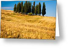 San Quirico D'orcia Greeting Card