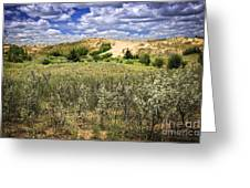Sand Dunes In Manitoba Greeting Card by Elena Elisseeva