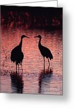 Sandhill Cranes Greeting Card
