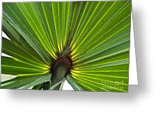 Saw Palmetto  Greeting Card